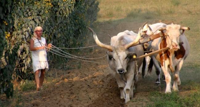 Сельскохозяйственная община Нью-Враджа Дхама, Венгрия